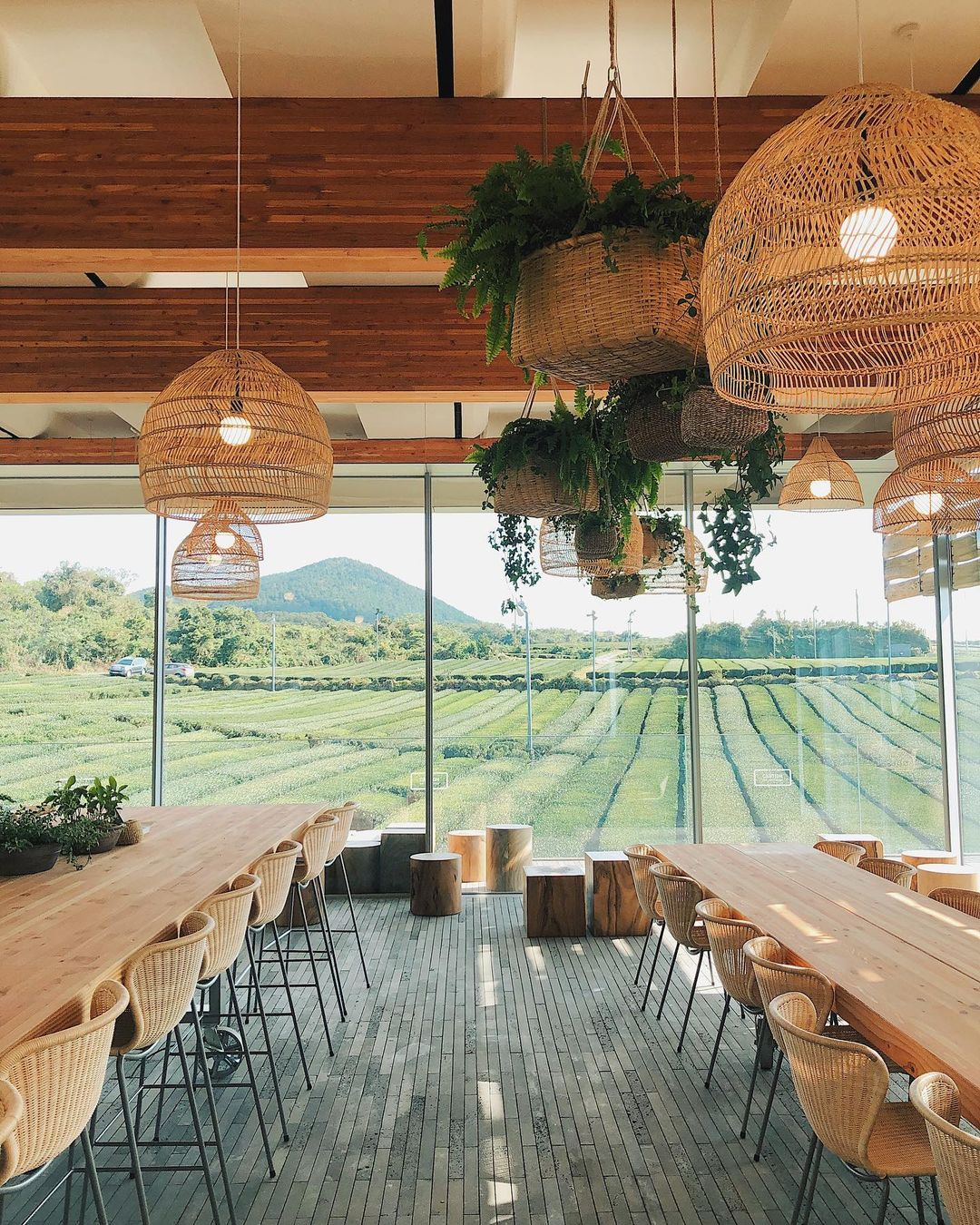 Things to do in Korea - Innisfree Jeju House