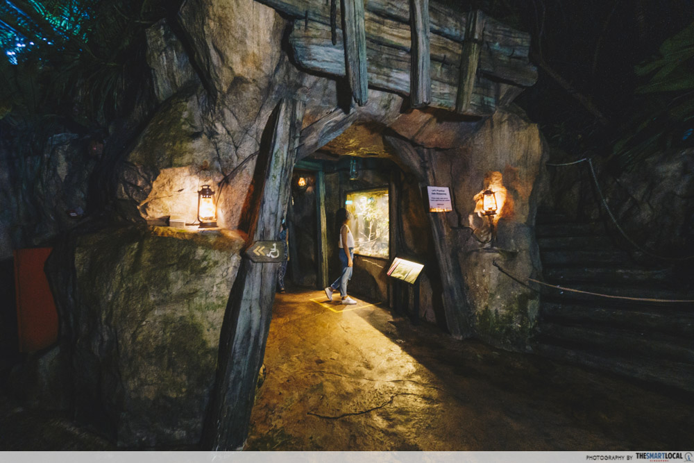 Night Safari Cave