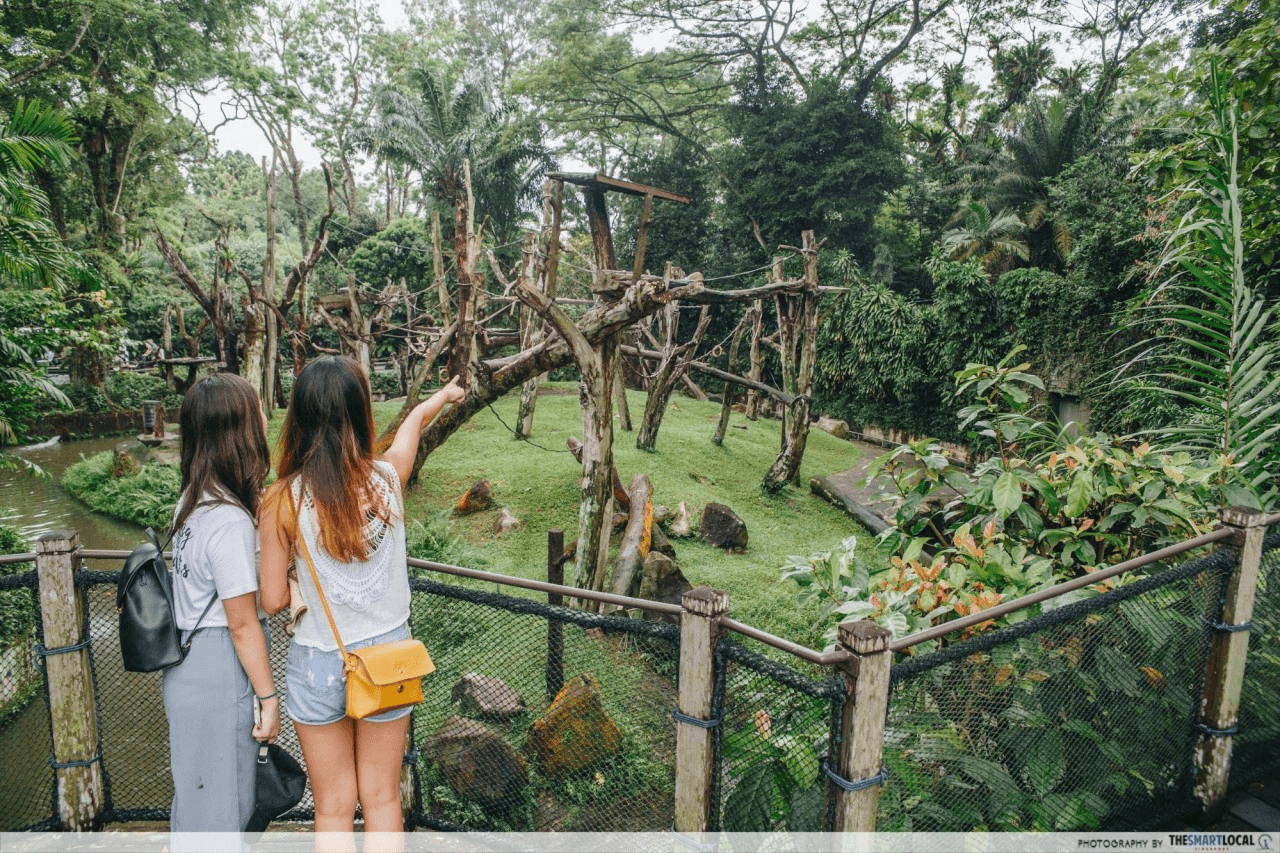 SingapoRediscovers Voucher Ideas - Singapore Zoo