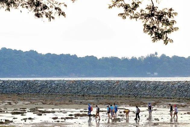 singaporediscover voucher adventures - intertidal walk