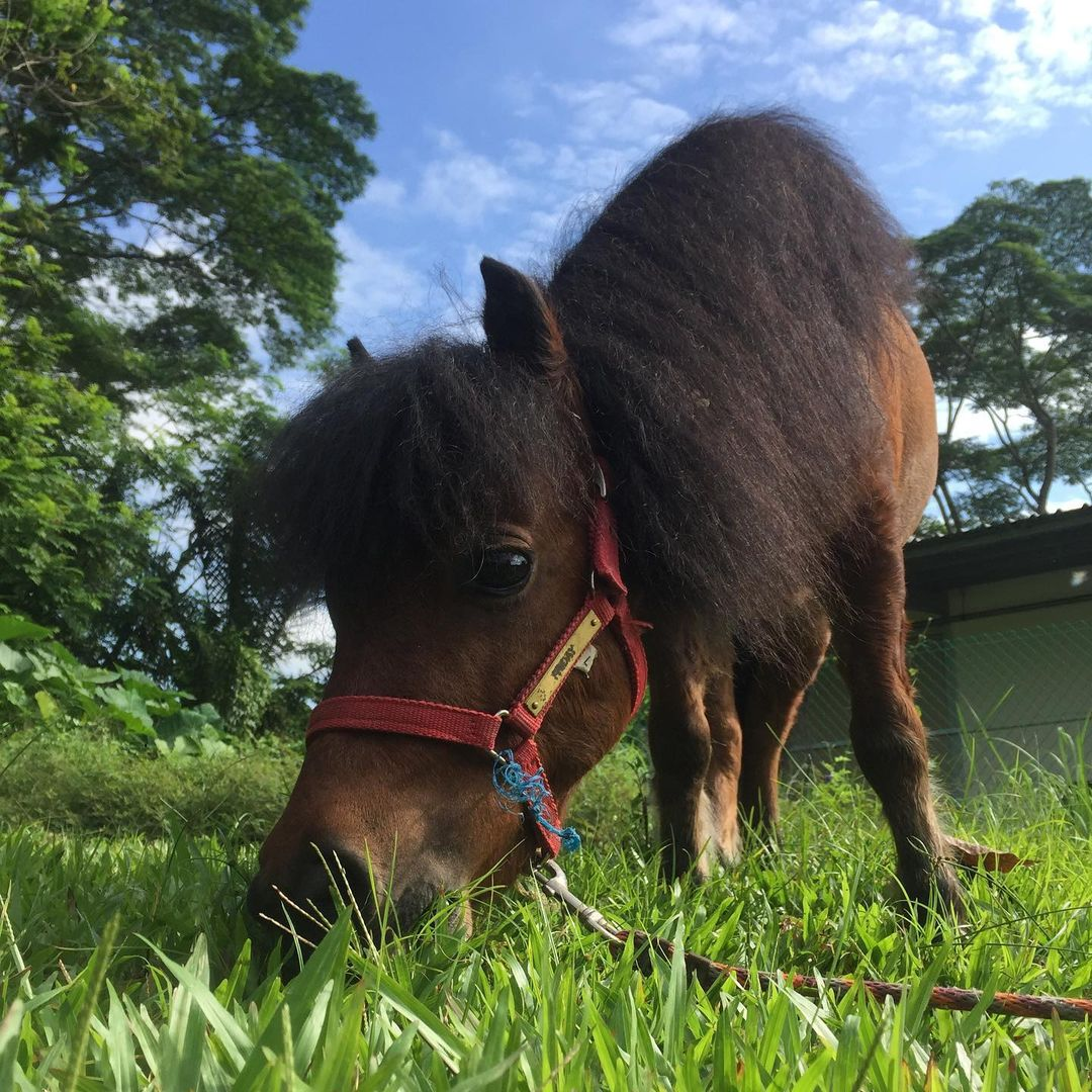 pet horses at in good company in ion orchard, things to do december 2020