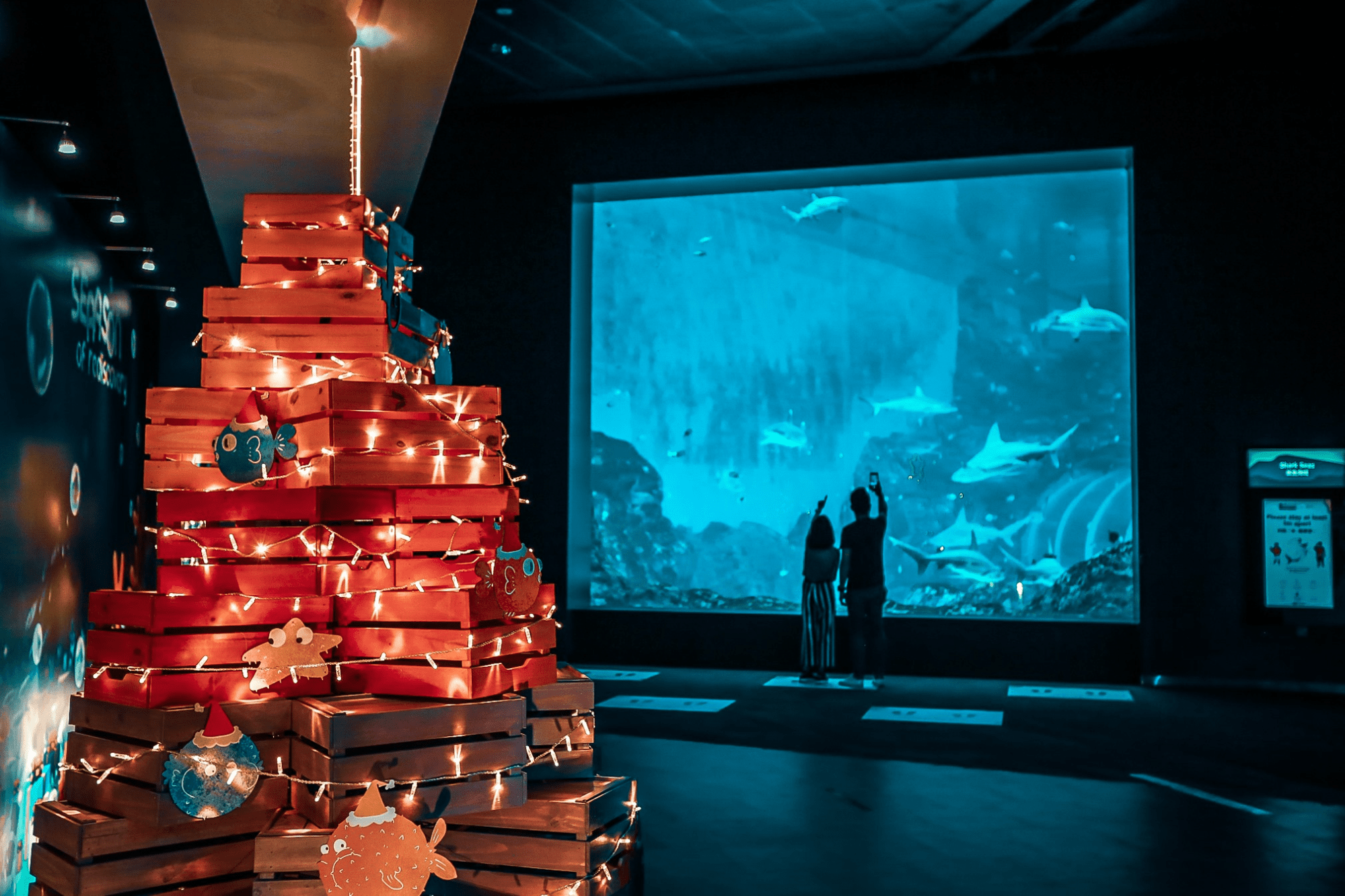 sea aquarium seaason of rediscovery, things to do december 2020