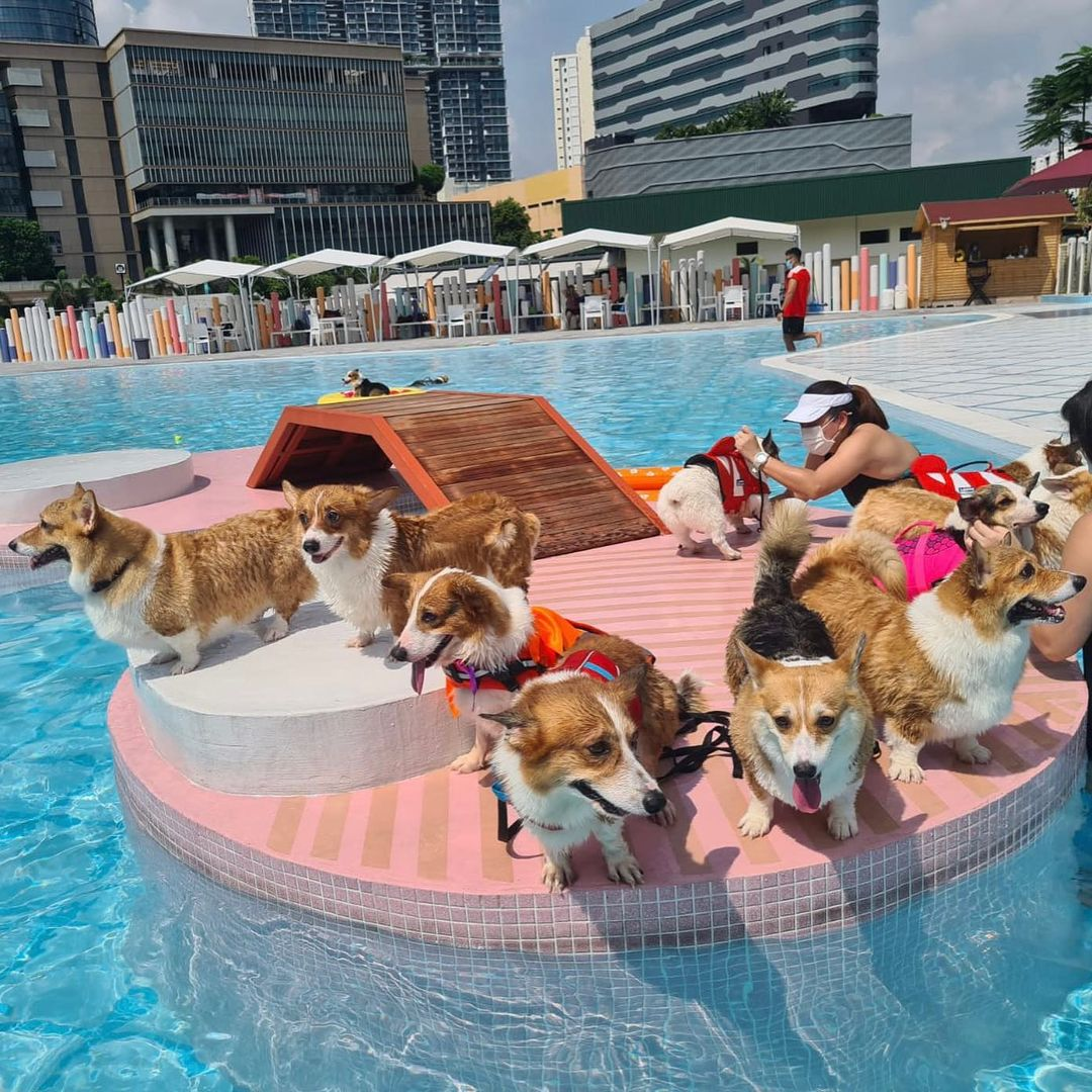 Wag & Wild Dog Waterpark - New attractions in Singapore