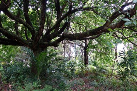 st john's and lazarus island singapore - tempinis tree