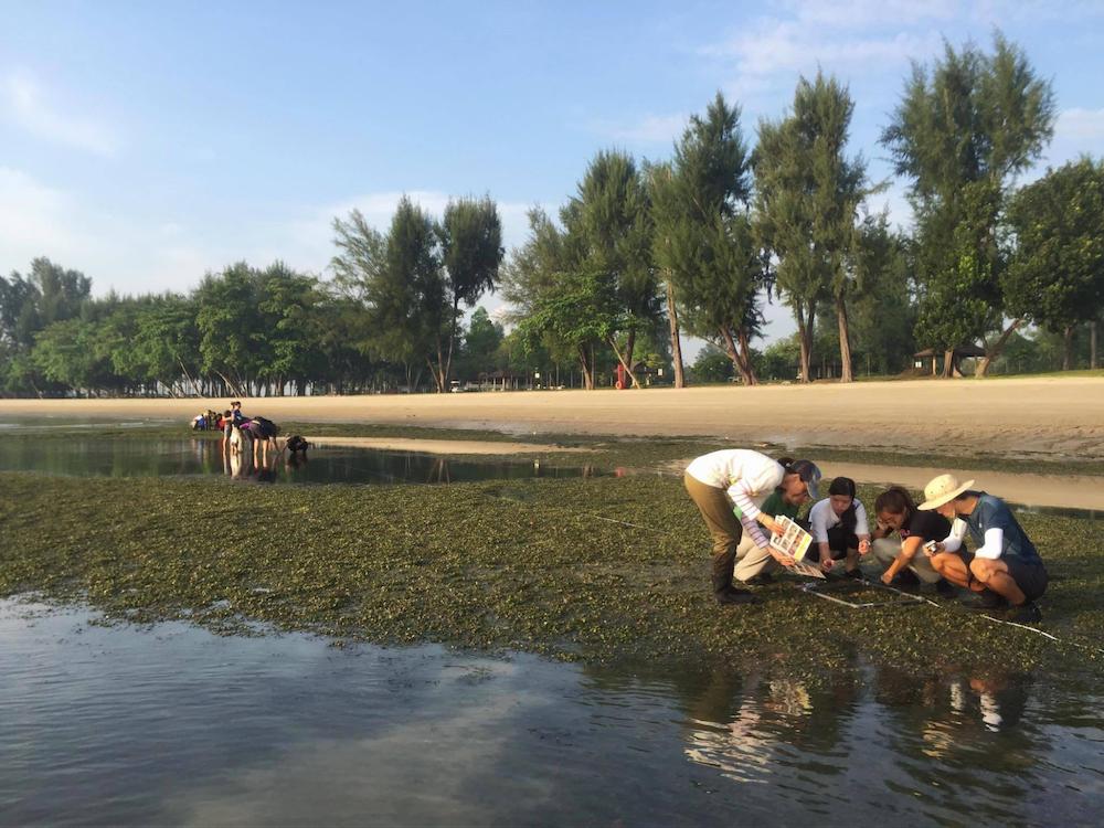 st john's and lazarus island singapore - intertidal walk