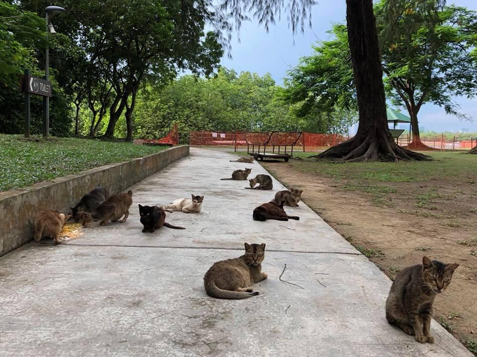 st john's island cats