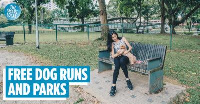 dog runs