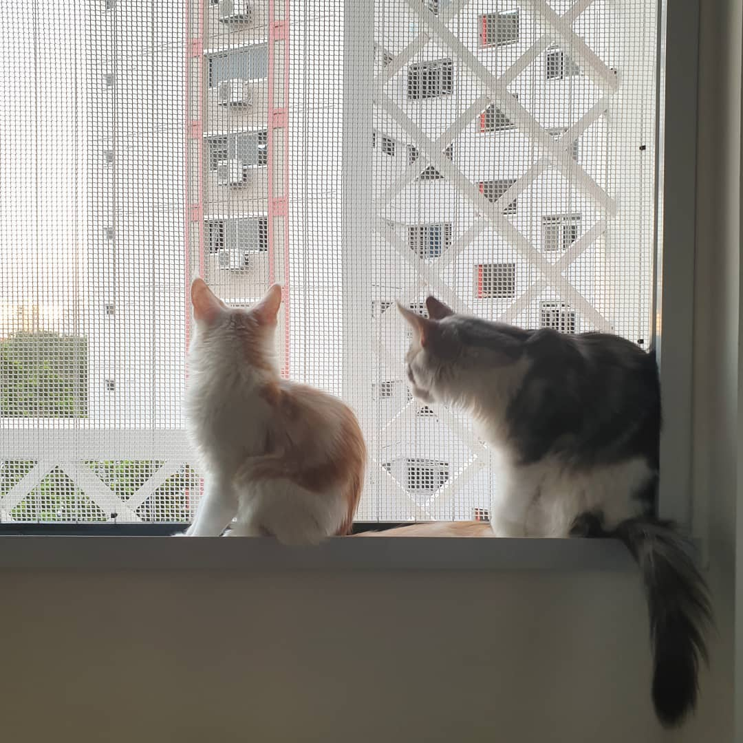 Cat owner guide - HDB meshed windows