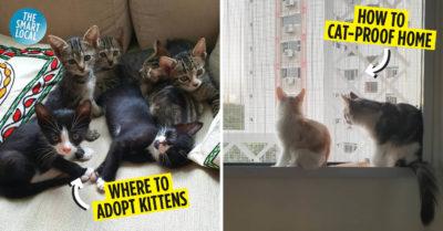 Cat owner guide