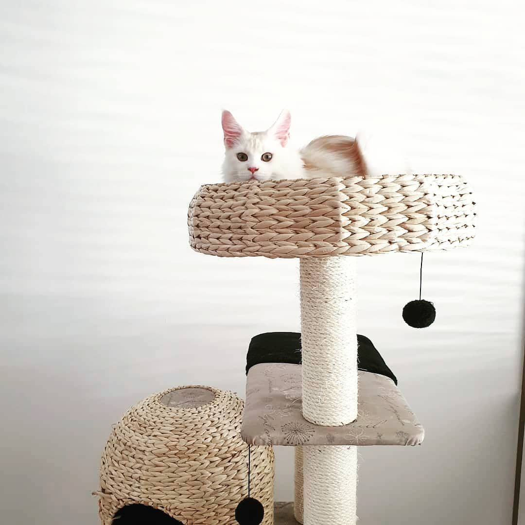 Cat owner guide - cat tree