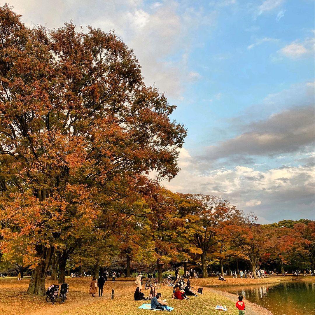Autumn Japan, Yoyogi Park, Tokyo