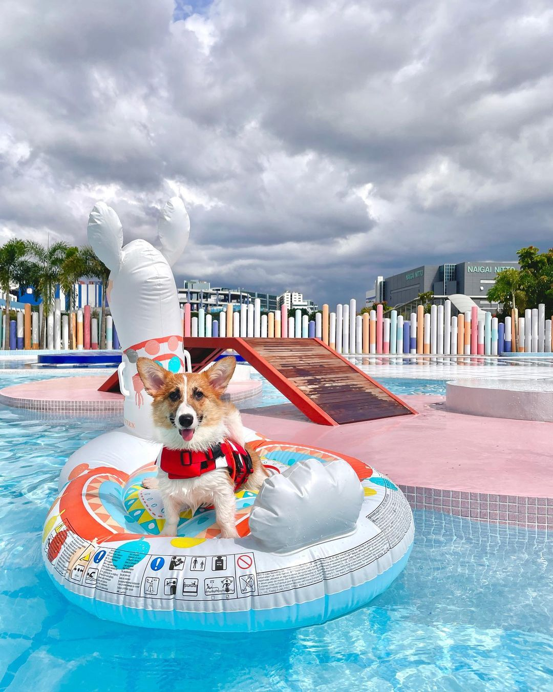 Wag & Wild Dog Waterpark - Things to do in January 2021