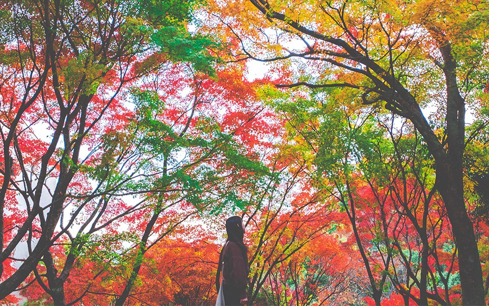 Kankakei in autumn