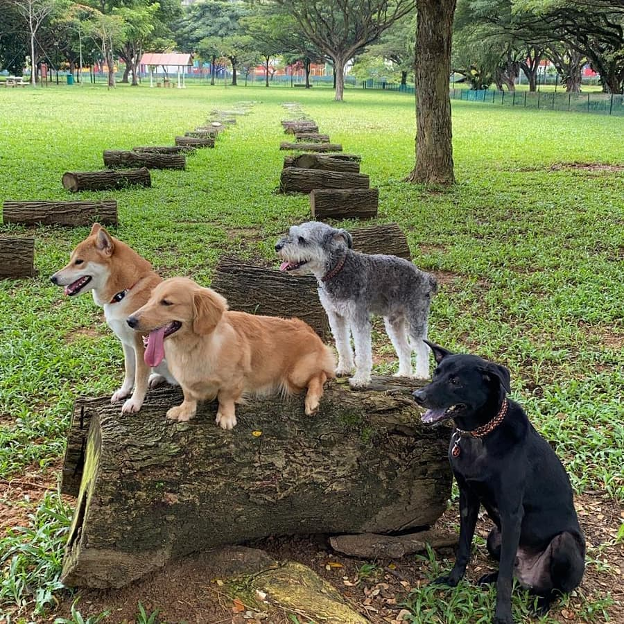 West Coast Park Dog Run