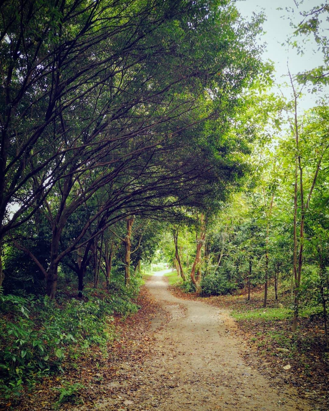 Dairy Farm Nature Park - Wallace Trail
