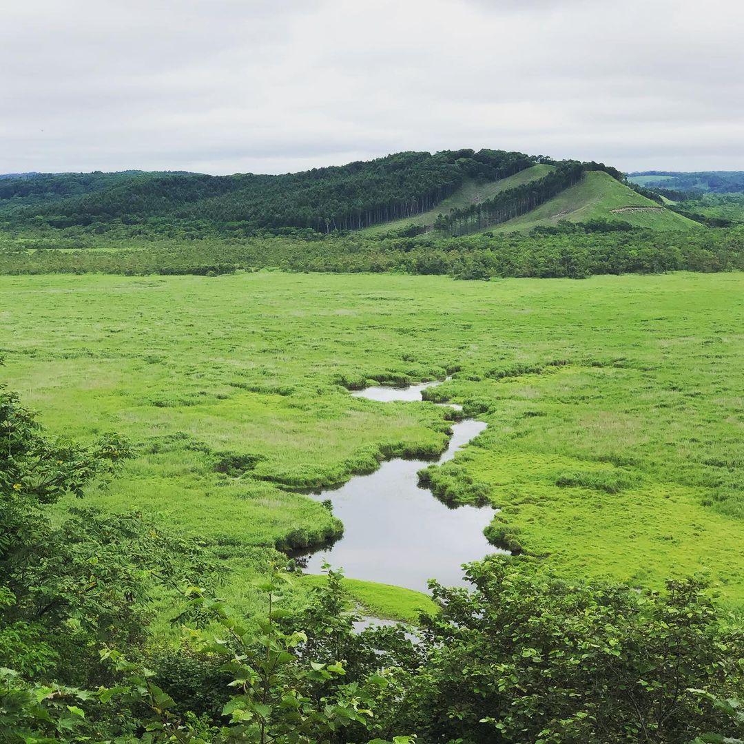 greenery of the kushiro marsh