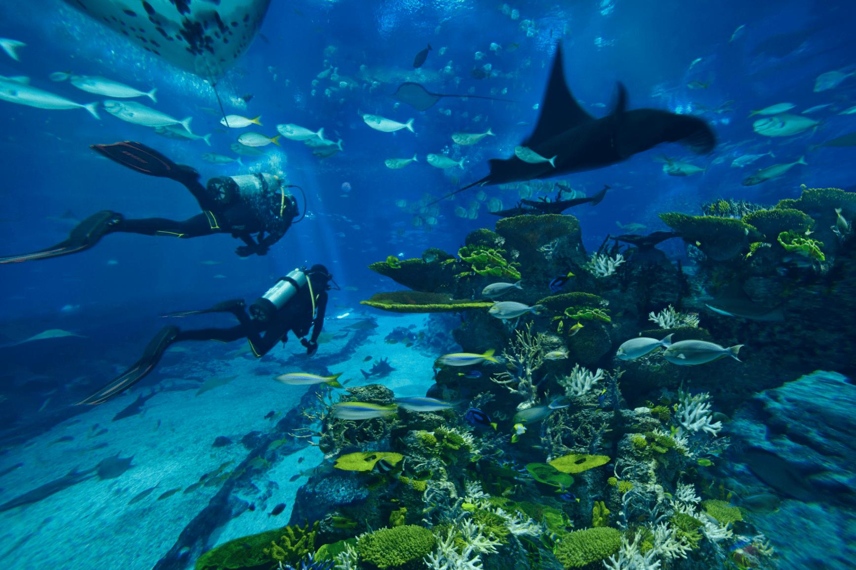 Sentosa attraction tips - S.E.A. Aquarium