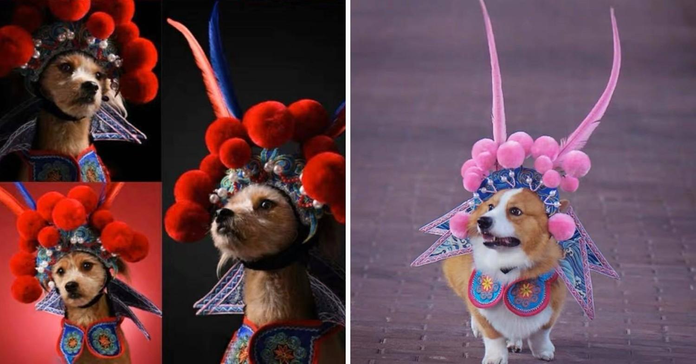 chinese opera singer dog costume