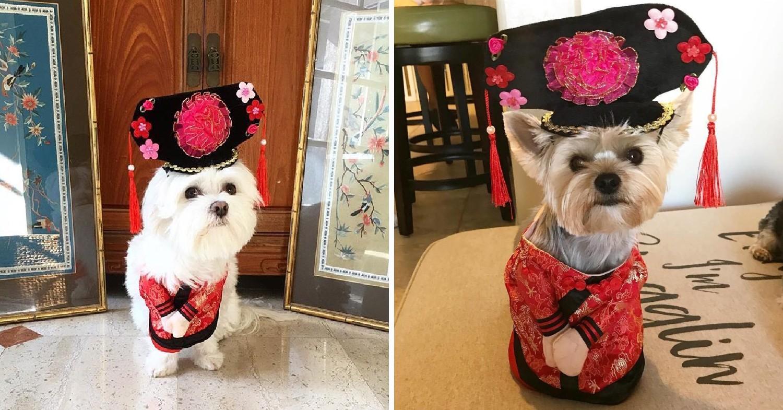 CNY chinese princess dog costume