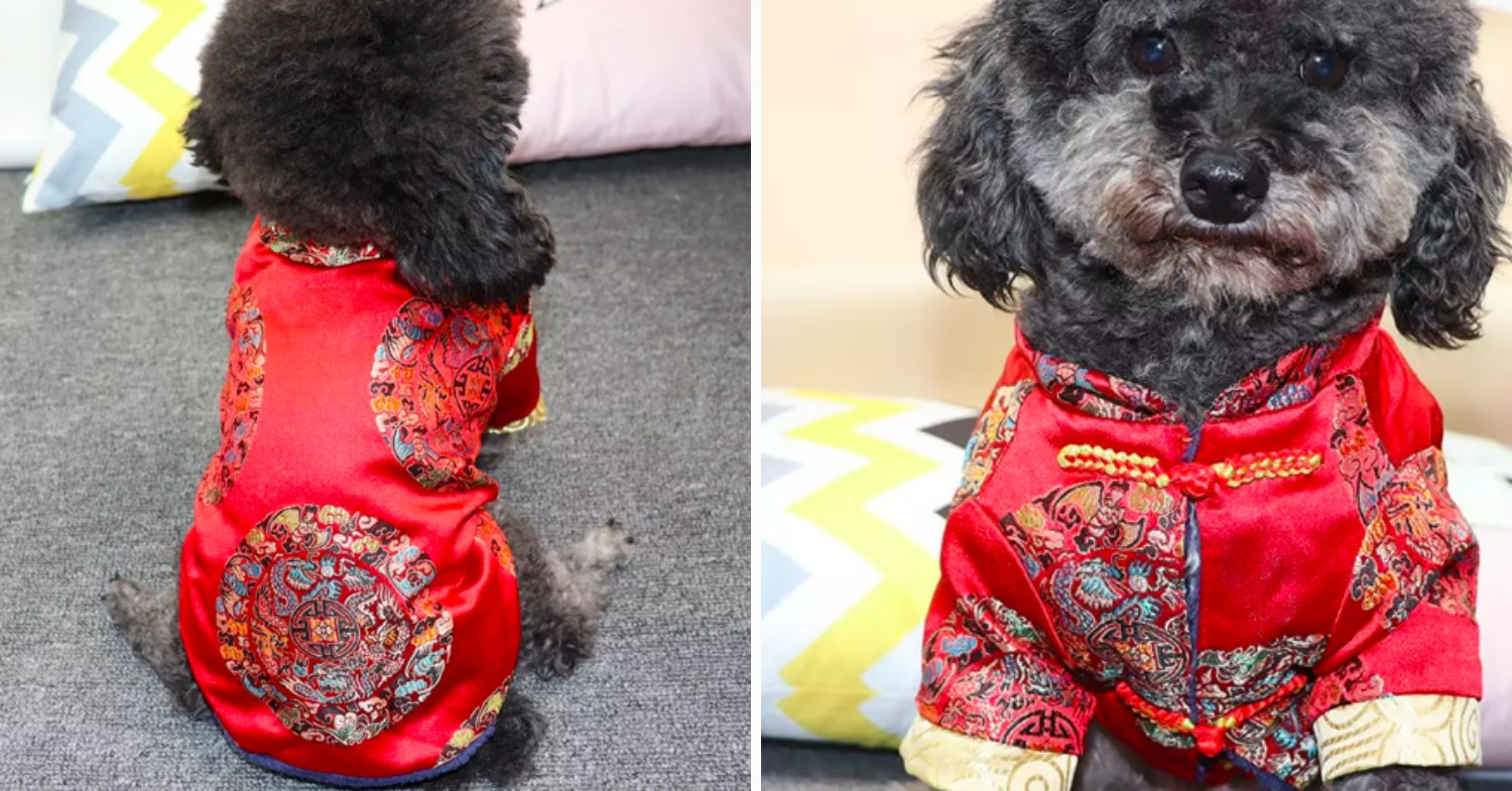 CNY tang suit dog outfit