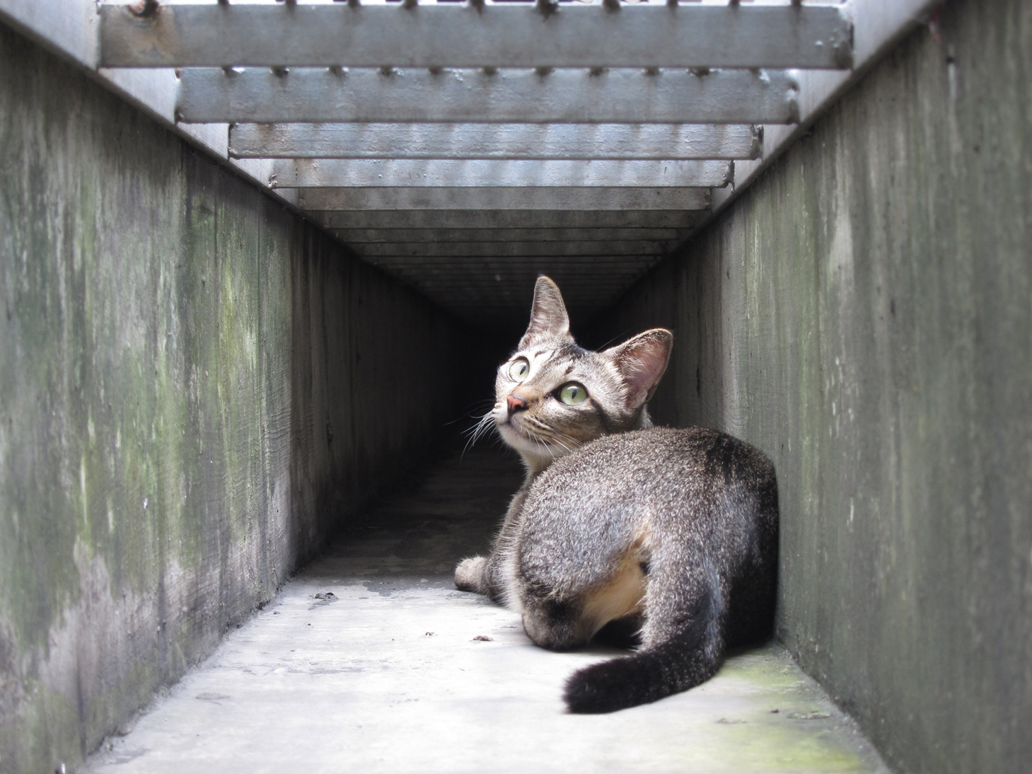 kucinta cat secret fact