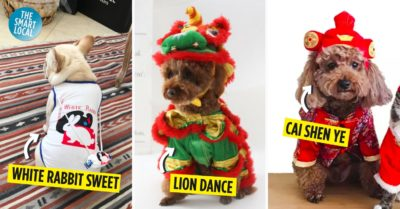 Chinese New Year Dog outfits cover image
