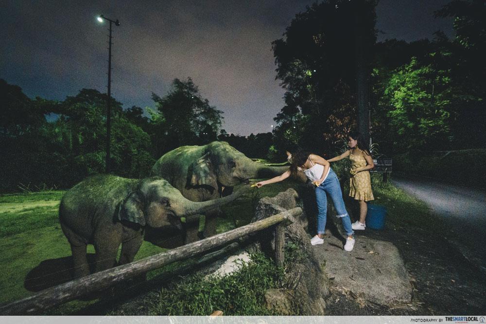 Elephant feeding session