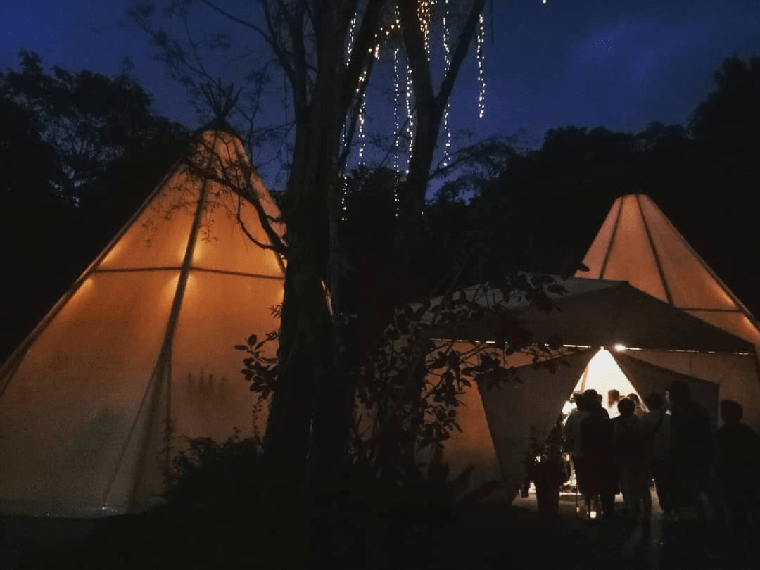 Evening in the wild