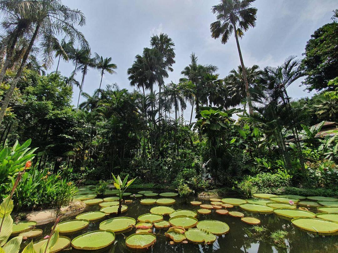 Singapore botanic gardens guide - Ginger Garden