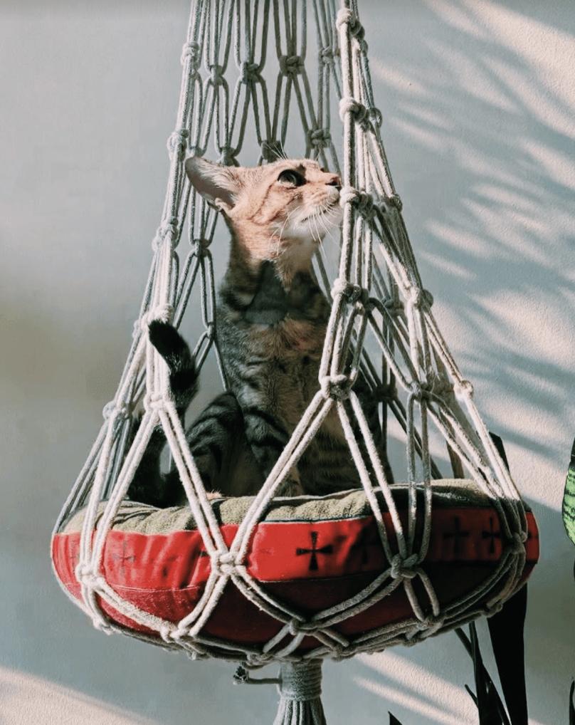 cats of the world purrzaar - cat hammock
