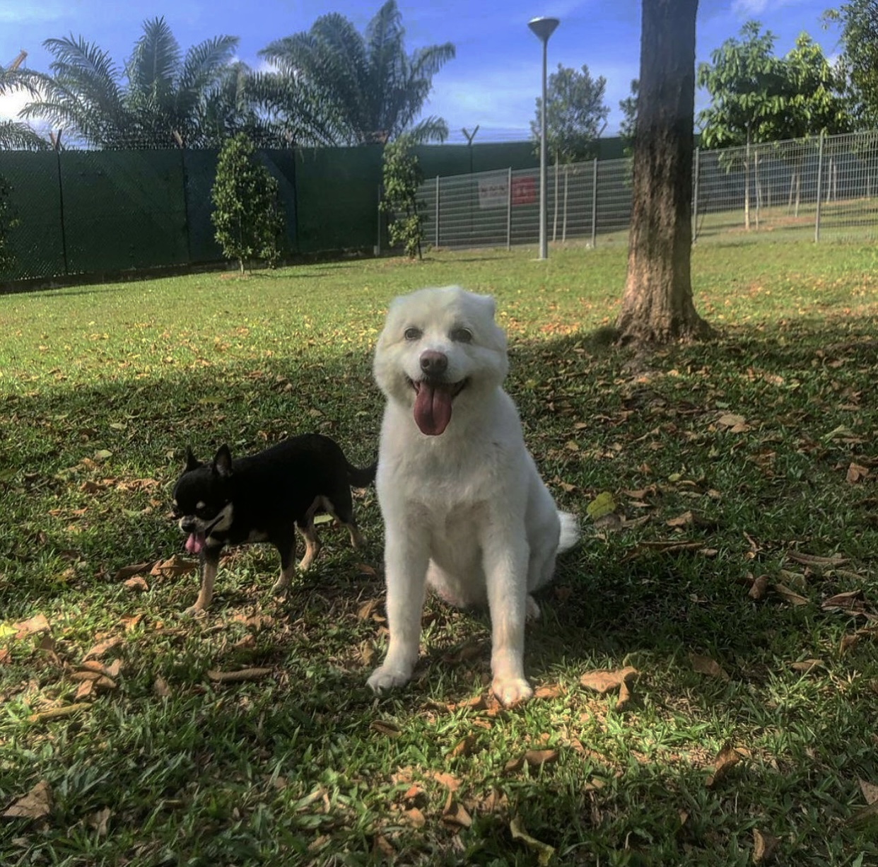 Sembawang Park - dog run