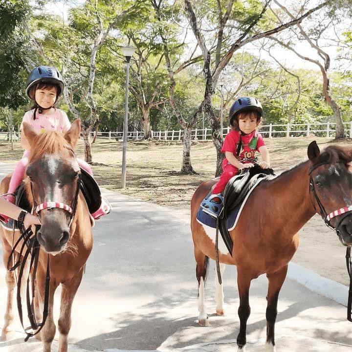 pasir ris park - gallop stable - horse riding