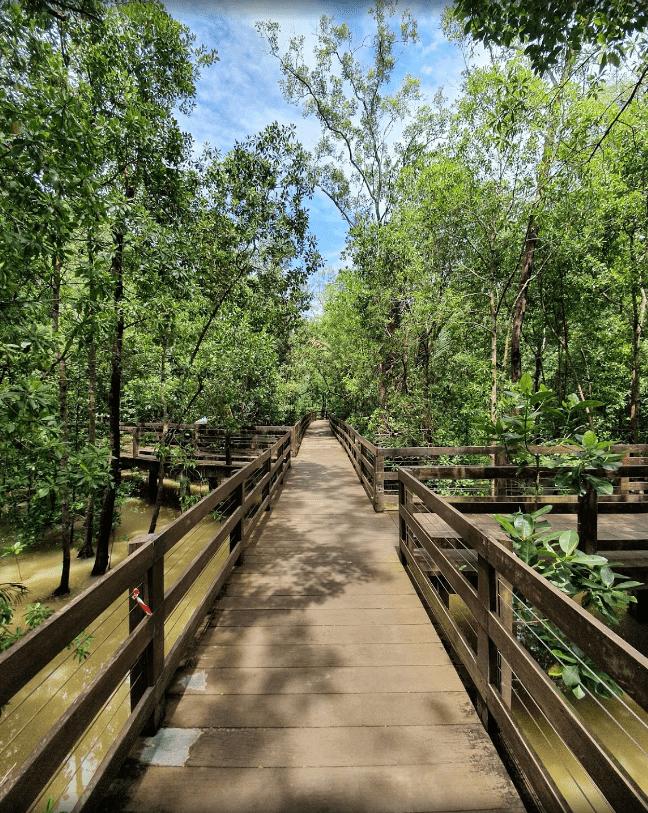 pasir ris park - mangrove boardwalk