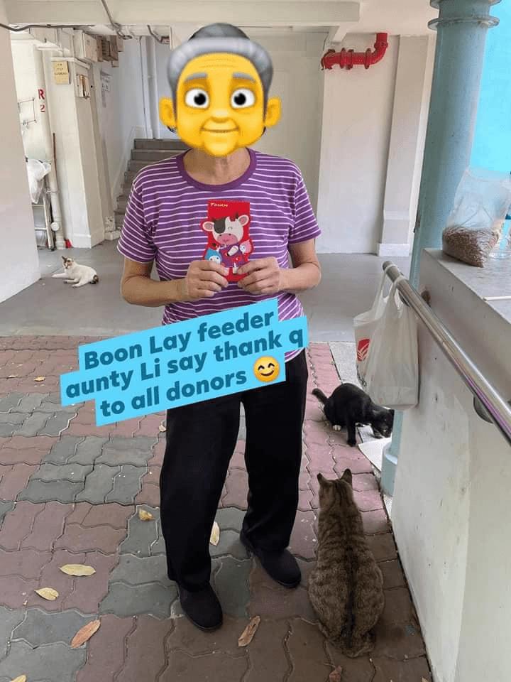 elderly cat feeder