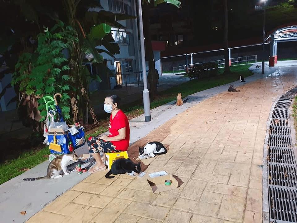 Elderly cat feeders