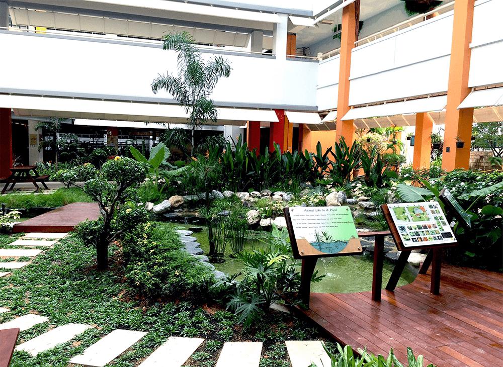 Singapore School Pond