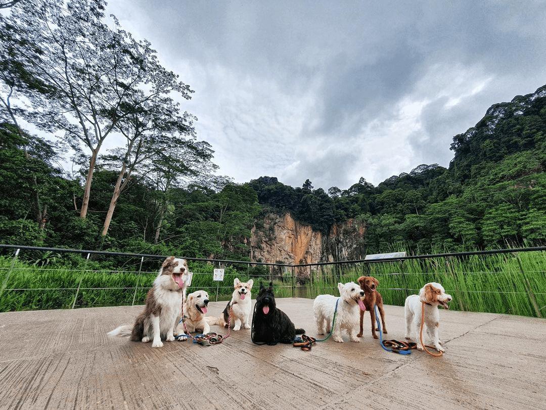 Furry Friends Singapore Quarry