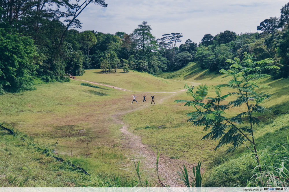 Clementi Forest