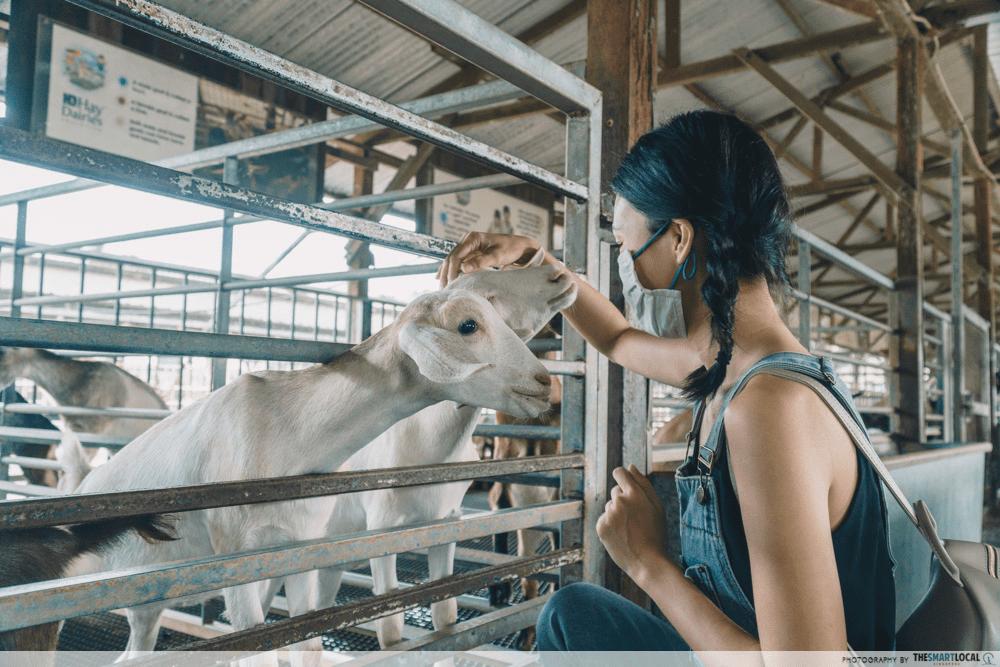 Goat Farm Singapore