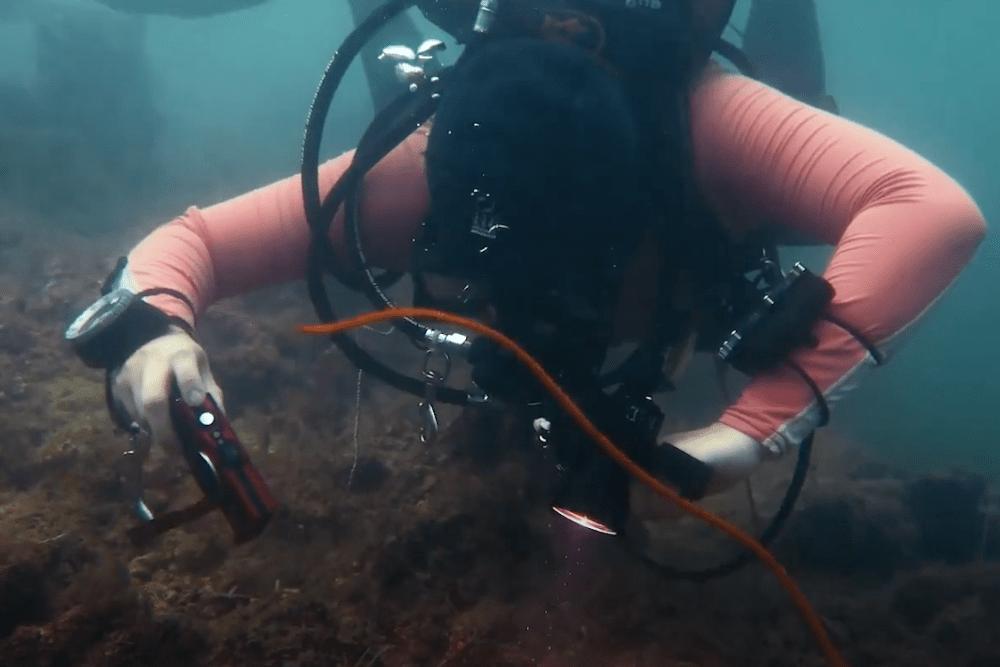 Protection of marine wildlife