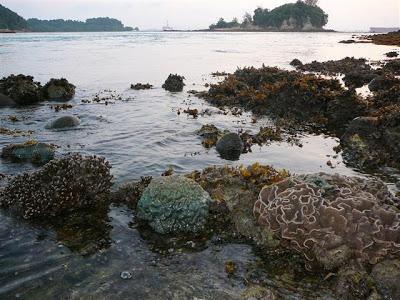 Pulau Satumu corals