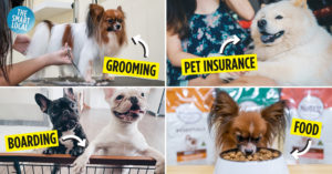 How To Save Money For Dog Owners In Singapore