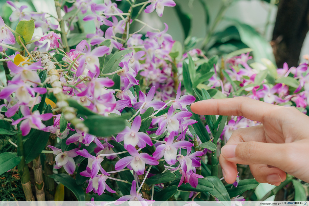 Tropical Montane Orchidetum - The Sembcorp Cool House