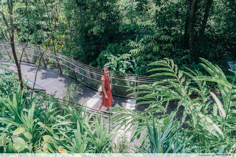 Tropical Montane Orchidetum