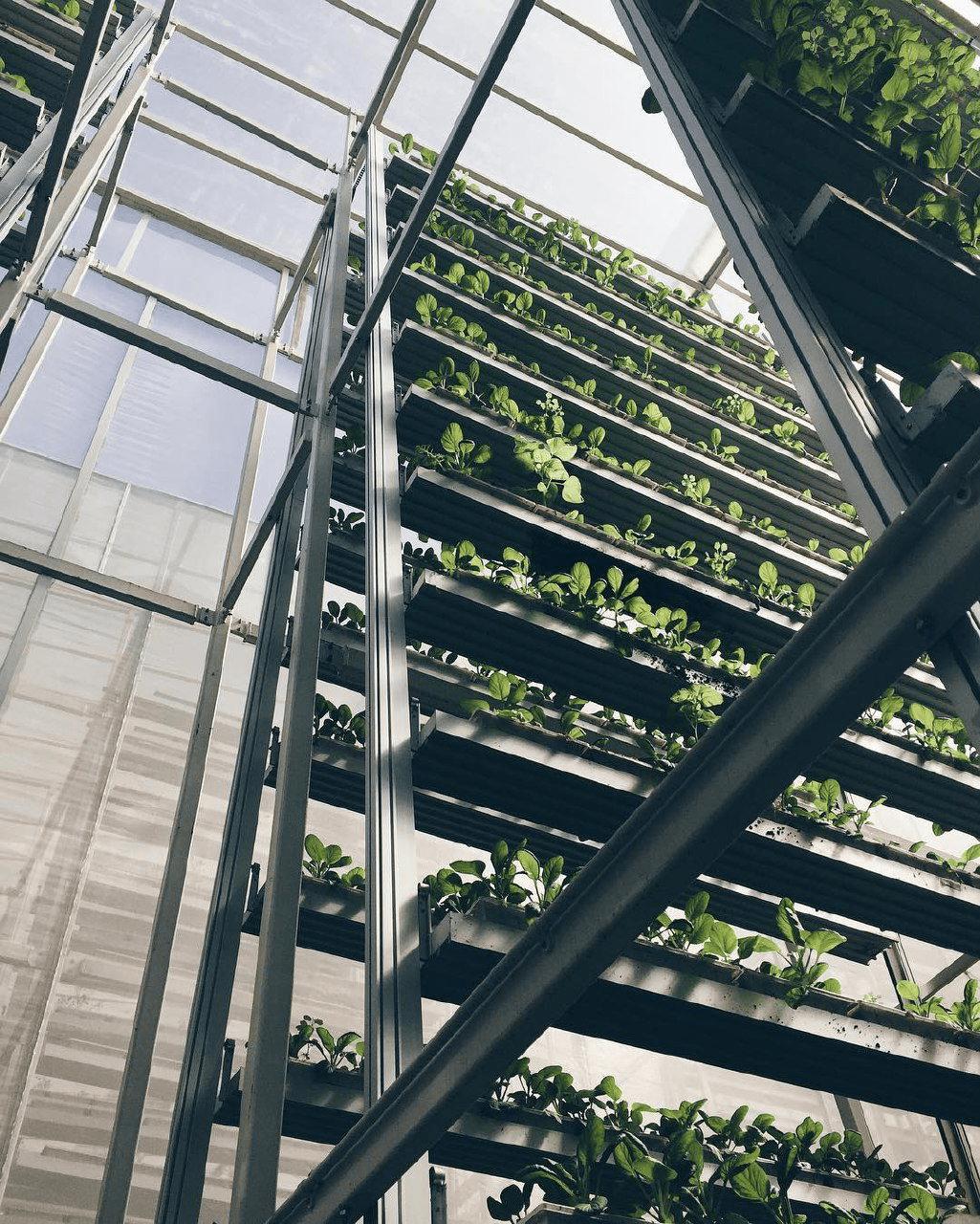 future predictions - Urban farming in Singapore