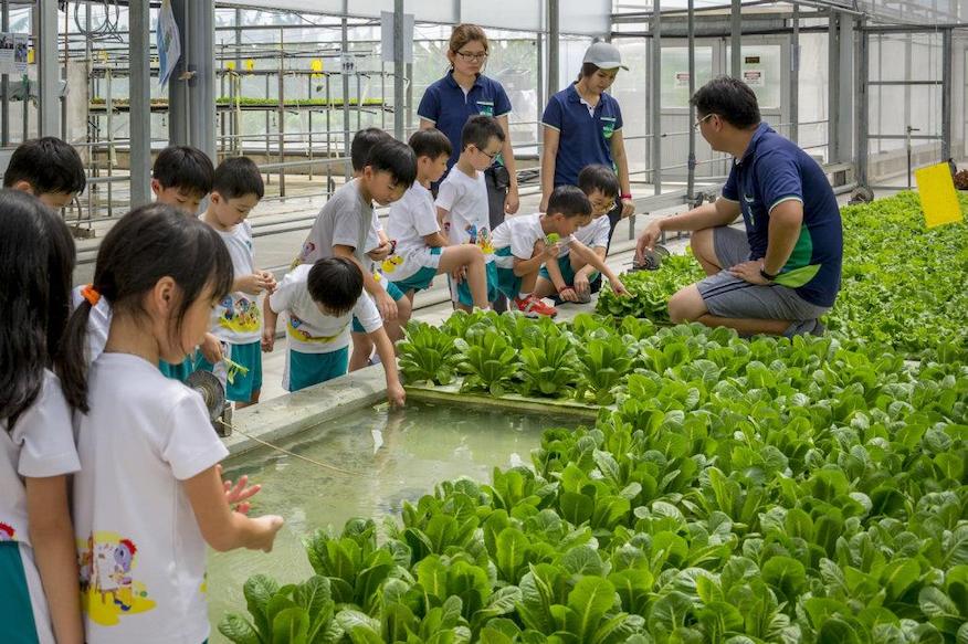 kok far technology hydroponic farm trip