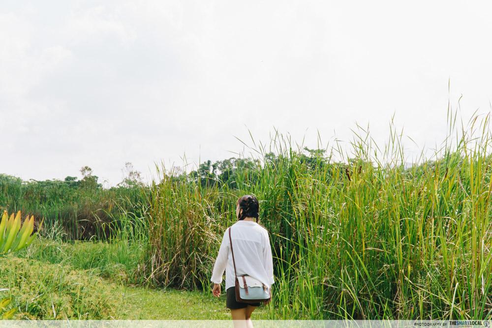 Lalang field