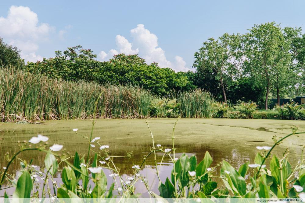 Things to do in Sengkang - Lalang field