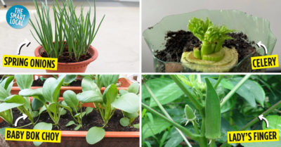growing vegetables at home