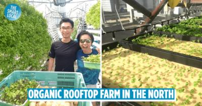 urban farms in singapore
